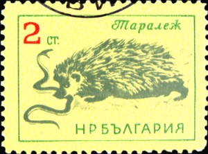 BULGARIA - CIRCA 1965: A stamp printed in Bulgaria showing hedgehog circa 1965